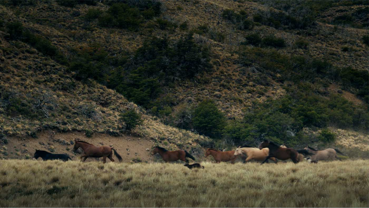 A low sun casts an eerie glow silhouetting the hills; wild horses gallop across the Pampas.
